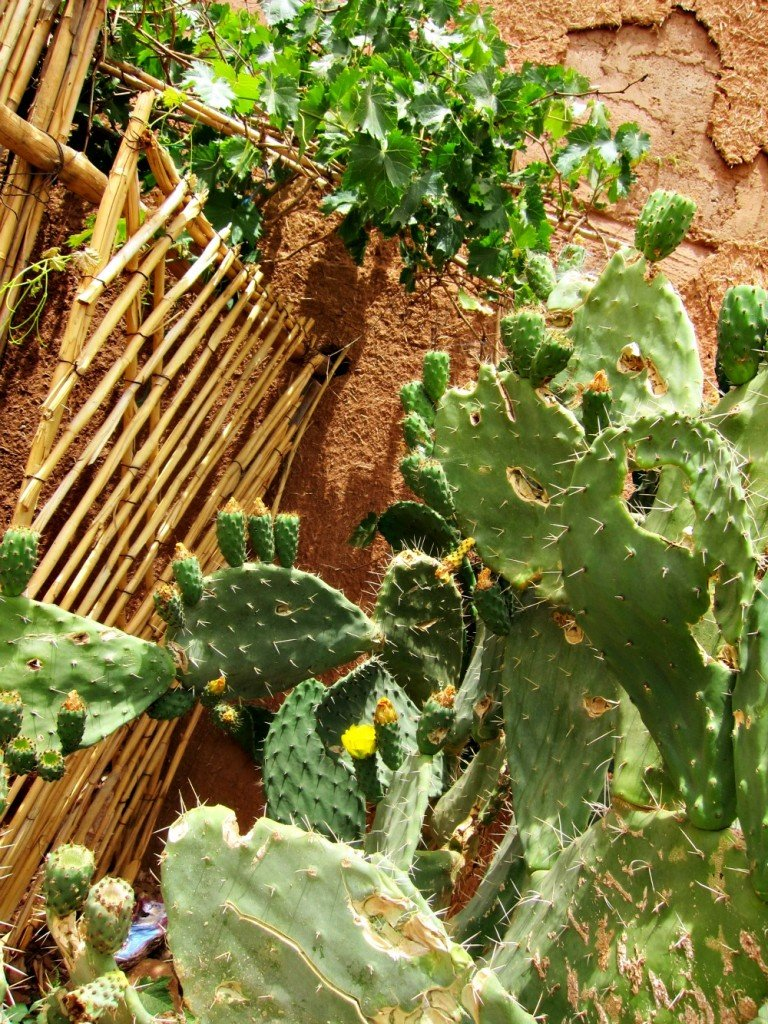 Home Garden in the Ksar of Ait Ben Haddou