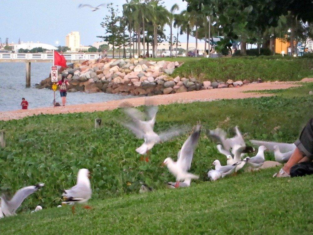Seagulls sharing food