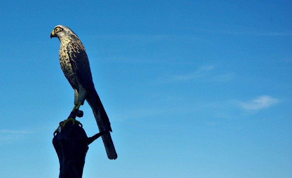 Day 7 Camlihemsin Bird of Prey Statue on the D010