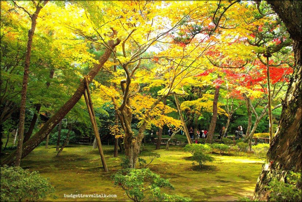 Kyotos best temple for autumn colours is budget - Moosgarten kyoto ...