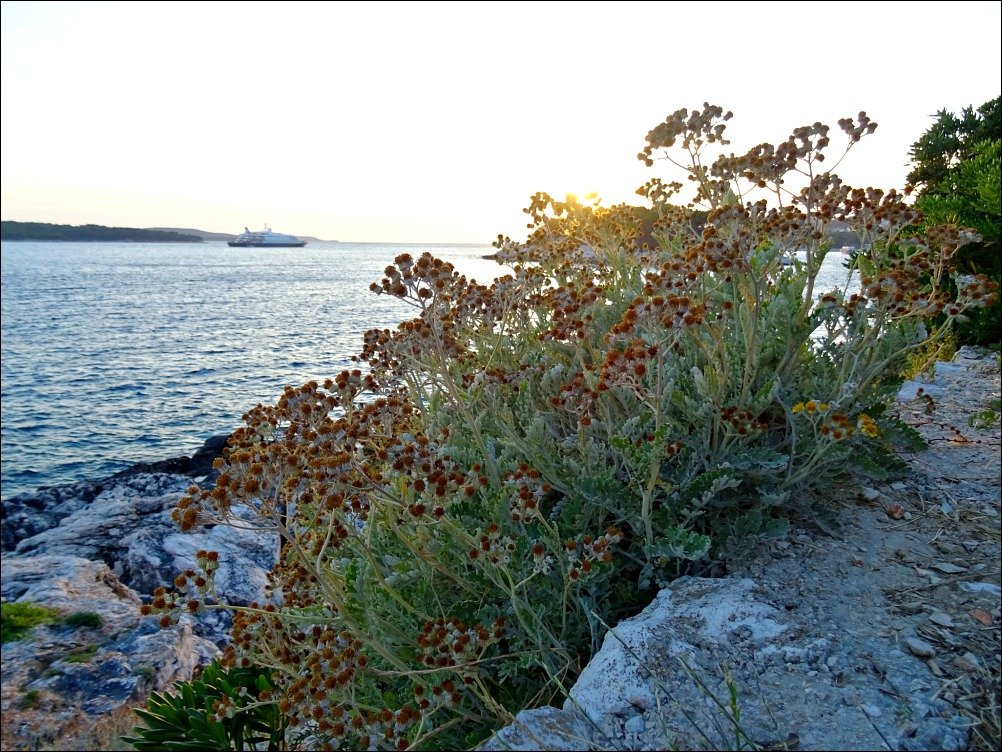 Hvar Ocean Views