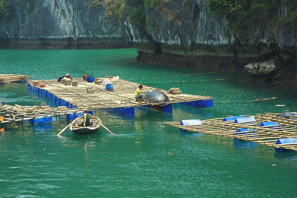 Tarring Traditional Fishing Boats Lan ha Bay