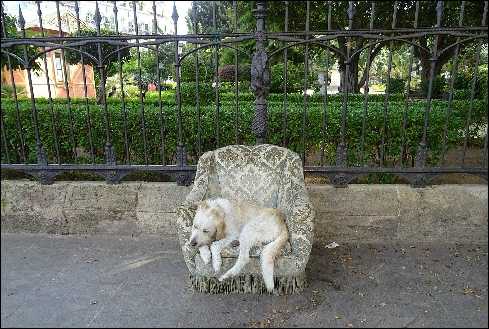 Palermo Dog in Chair, Sicily