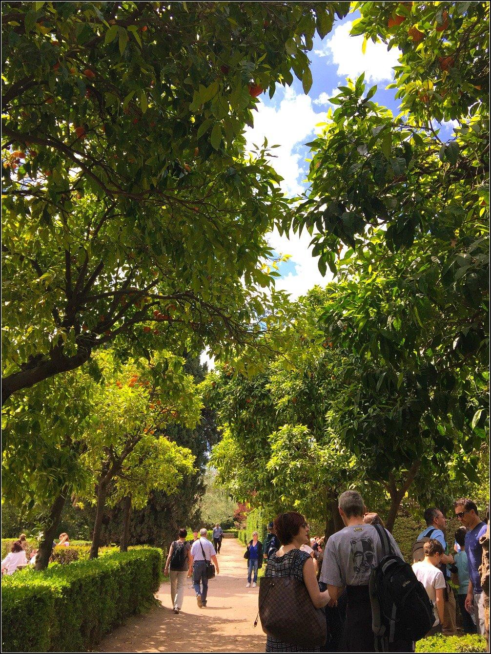 Palatine Farnese Garden Orange Trees
