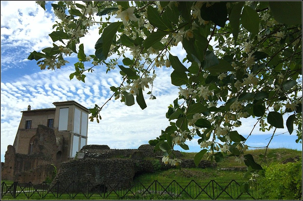Palatine Flowering Trees