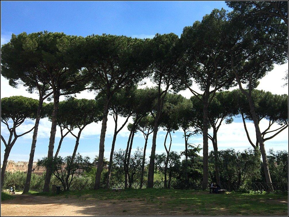 Palatine Plane Trees