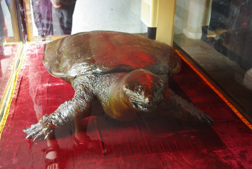 Sword Lake Tortoise