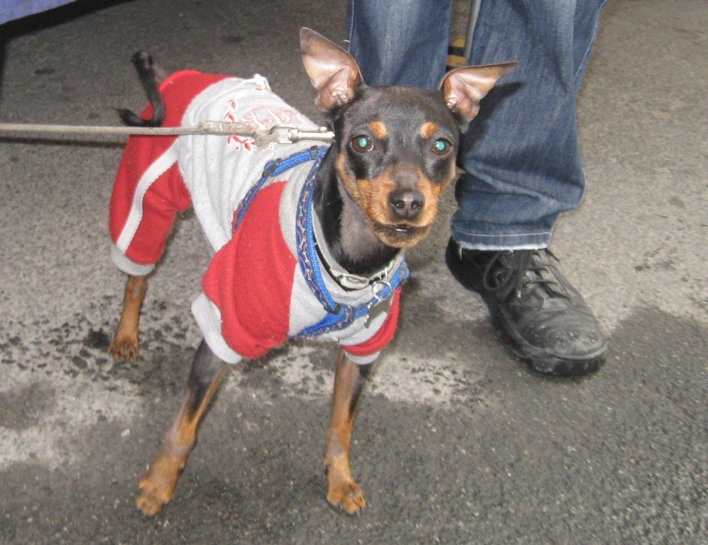 Market dog with attitude.
