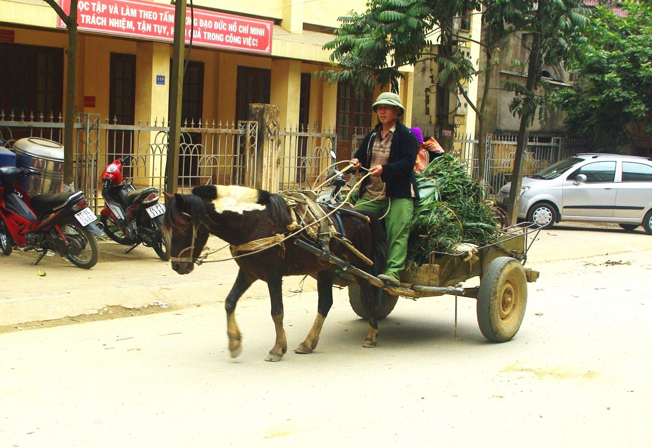 Horse and Cart Bac Ha, Vietnam