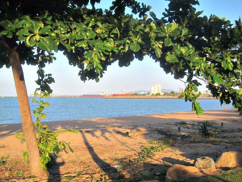 Walk the Strand in Townsville - I saw a Green Turtle laying eggs there yesterday!