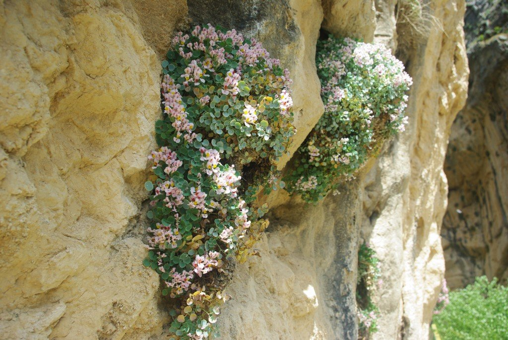 The cliff walls near the rope bridge were dotted with these flowers.