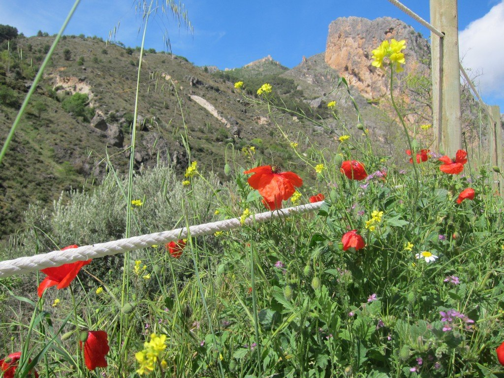 What can I say - More poppies!