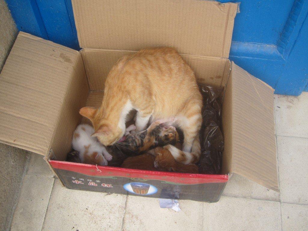 Essaouira Cat Family in a Box