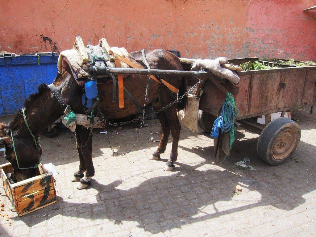 Donkey on a well-earned lunch break