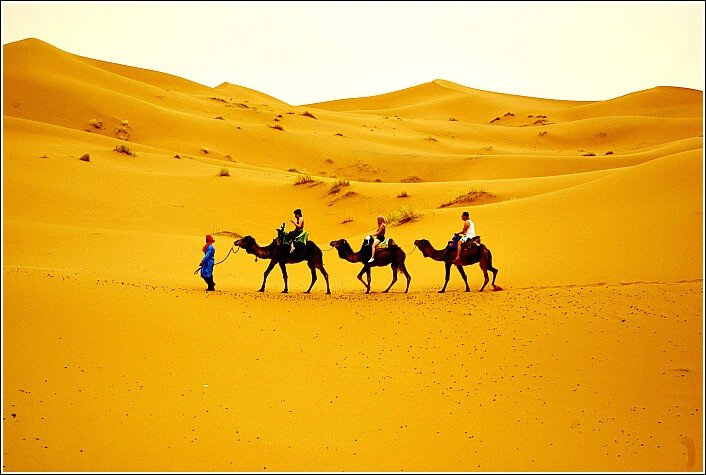 Photo of our Camels on a Trip into the Sahara after which I prepared my Sahara Desert Trip Packing List