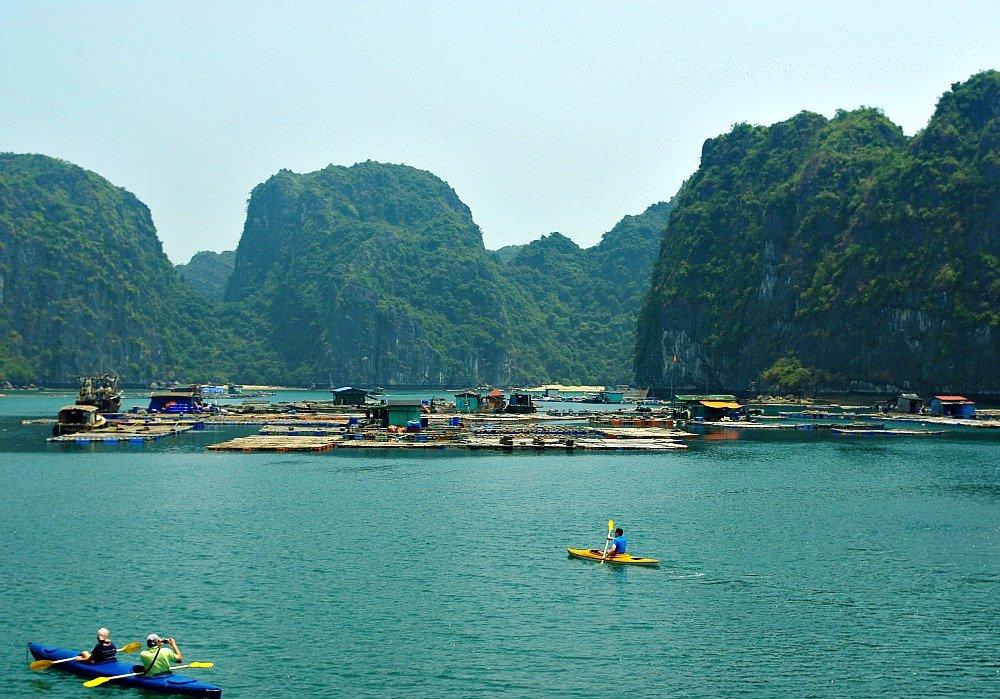 Image result for lan ha bay
