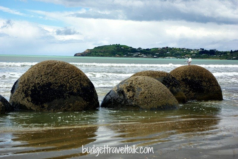 Moeraki boulders with Moeraki township in the background. There is a deep hole encircling each boulder