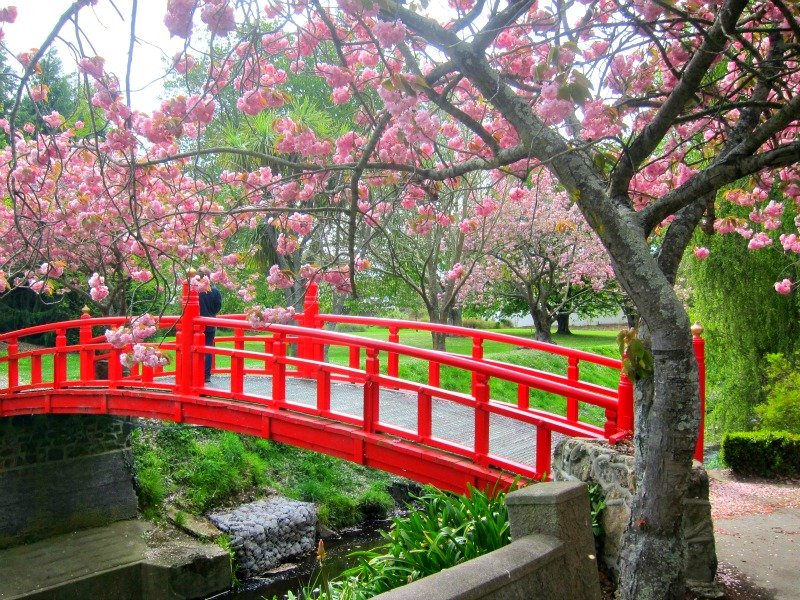 The japanese inspired bridge blew me away - what about those colours?