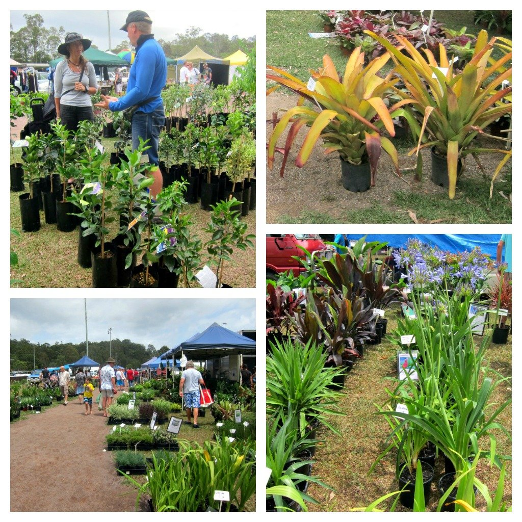 Plants galore at Yandina Markets