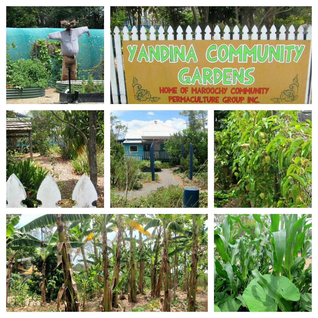 Yandina Community Gardens Collage