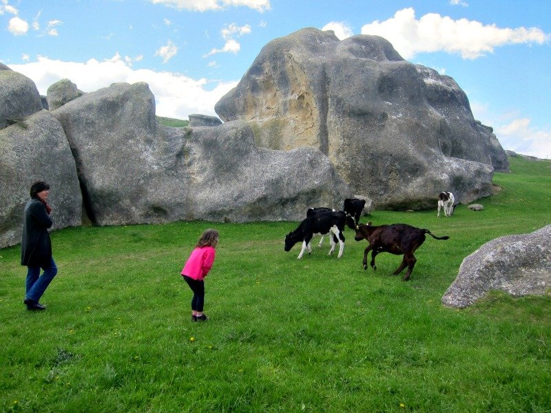 Elephant Rocks and Cows