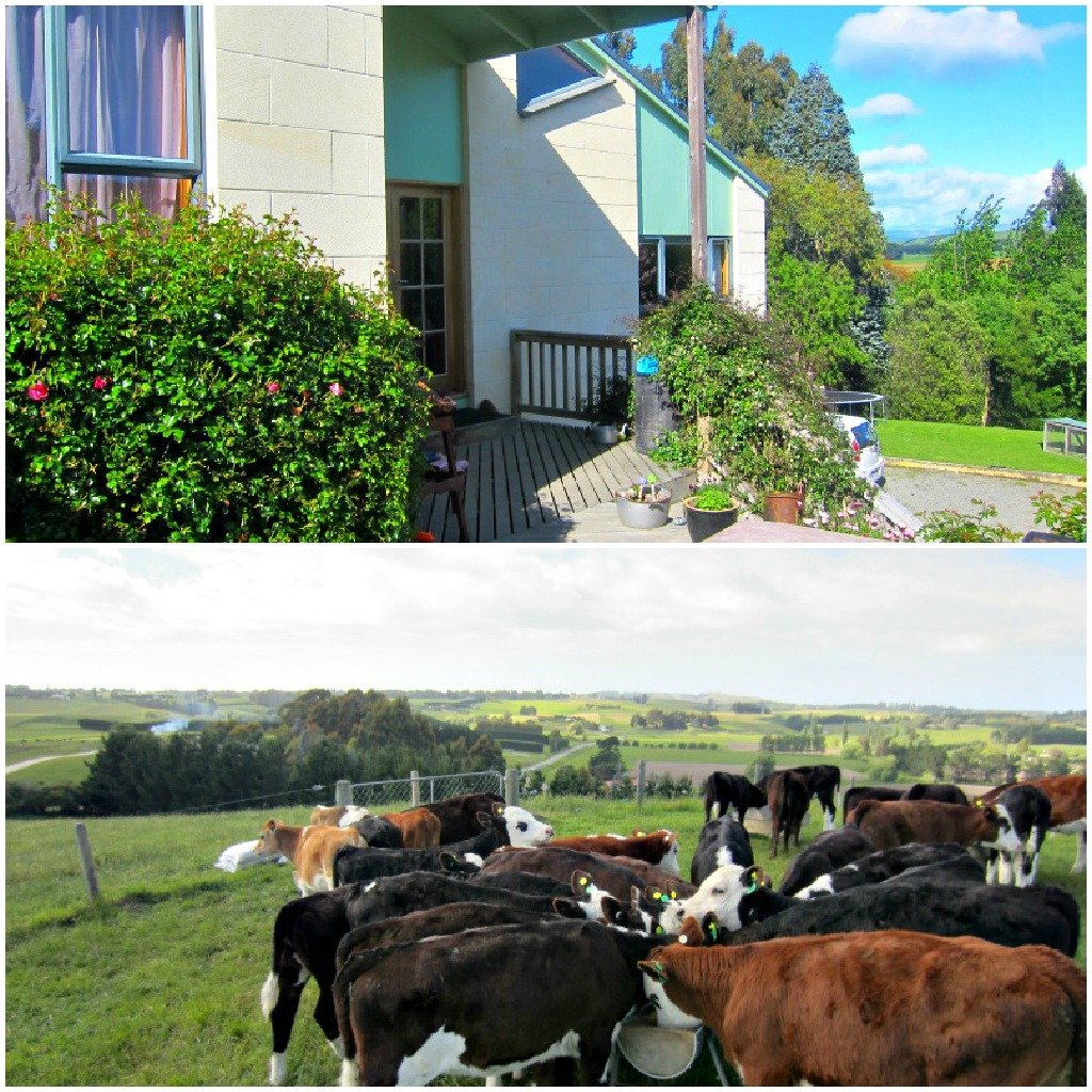 Gumtree is a modern farmhouse: Bovine views