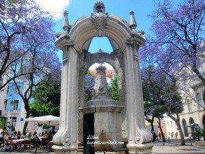 Lisbon Jacarandas - Carmo Square Lisbon