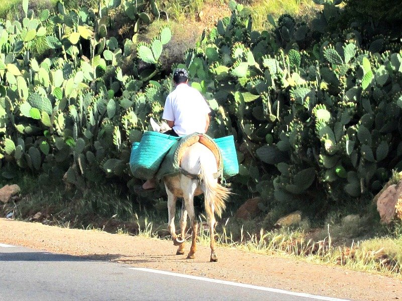 Working Donkeys are a common sight in Morocco.