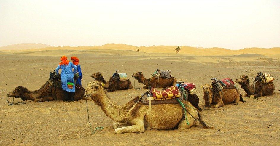 Camels waiting at Mergouza Dunes of Erg Chebbi