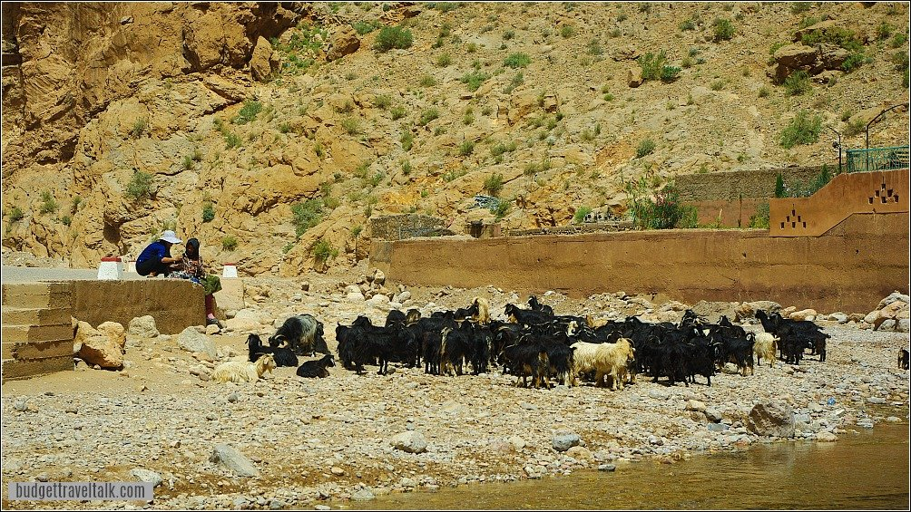 Todra Gorge Berber woman with goats
