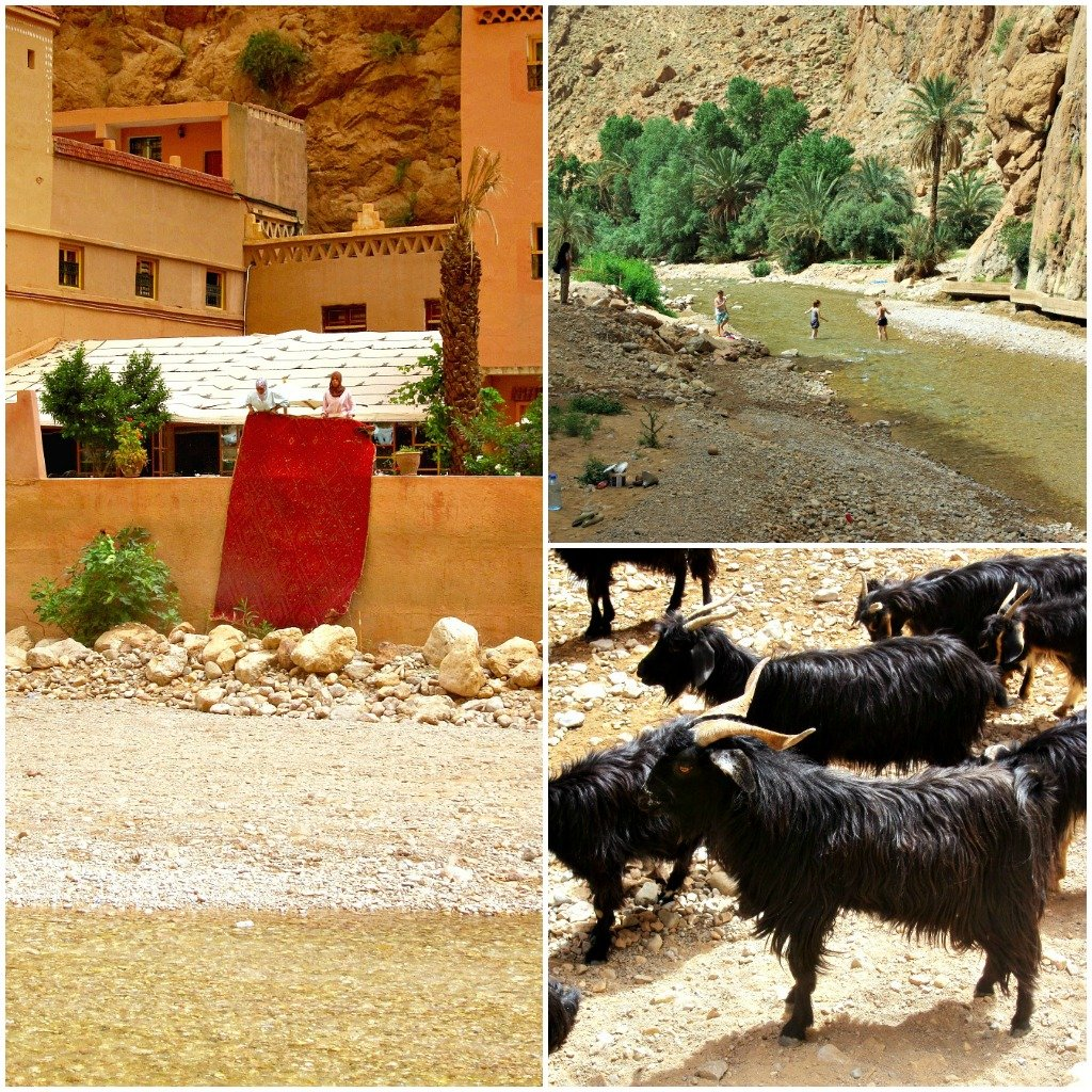 A collage that shows a Moroccan women beating a carpet, a picnic and goats in Todra Gorge.