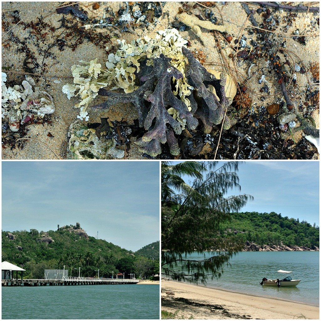 Seaweed, shells and washed up coral on the beach at Picnic Bay, Magnetic Island, Queensland