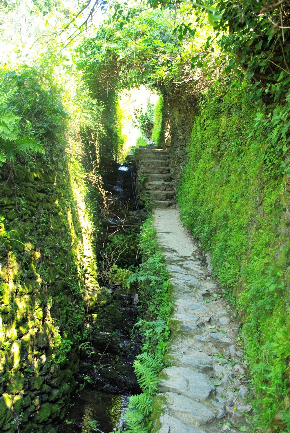 Romantic part of the pathway that leads between Monterosso al Mare and Vernazza
