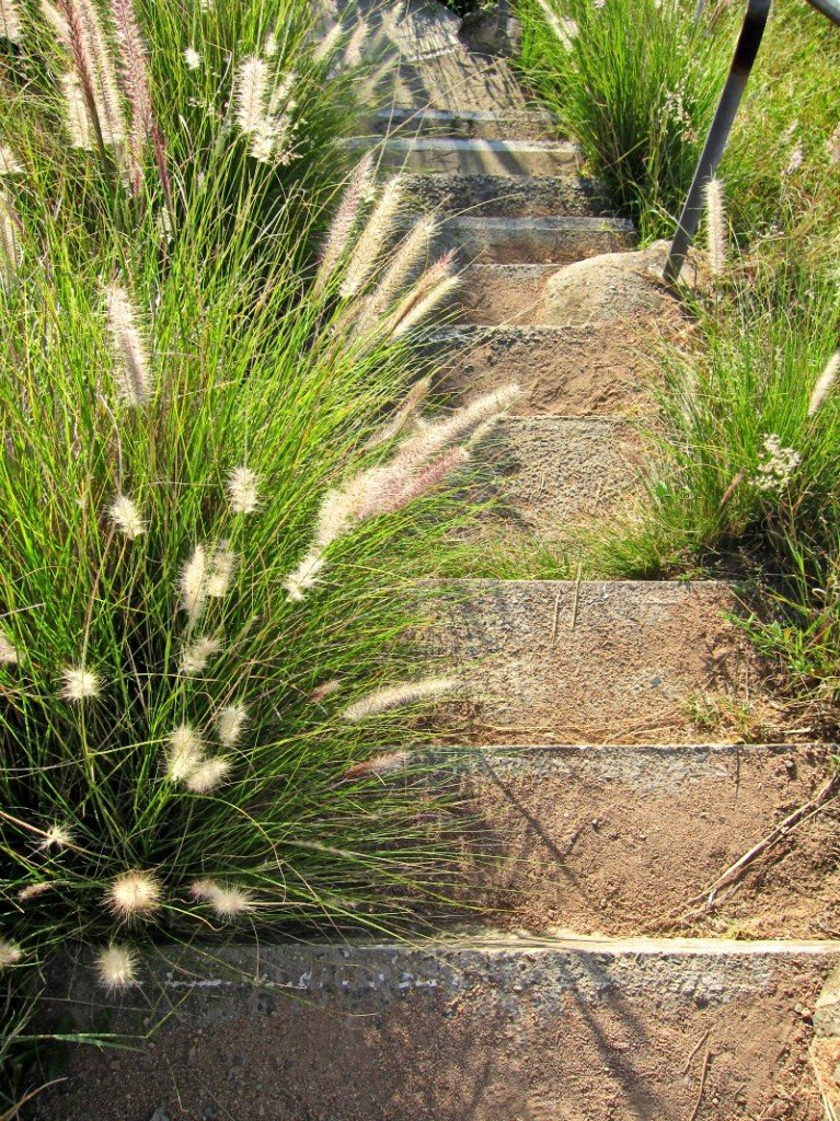 Native grasses and stairs