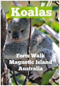 Find Koalas on Magnetic Island