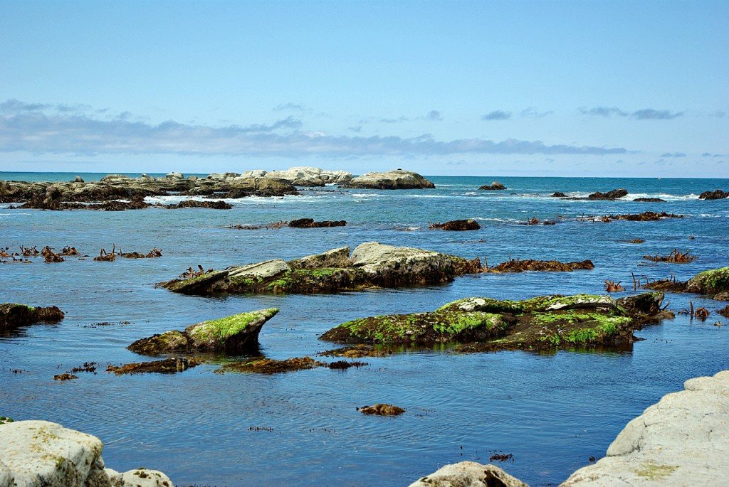 The ocean at Kaikoura is full of sea life