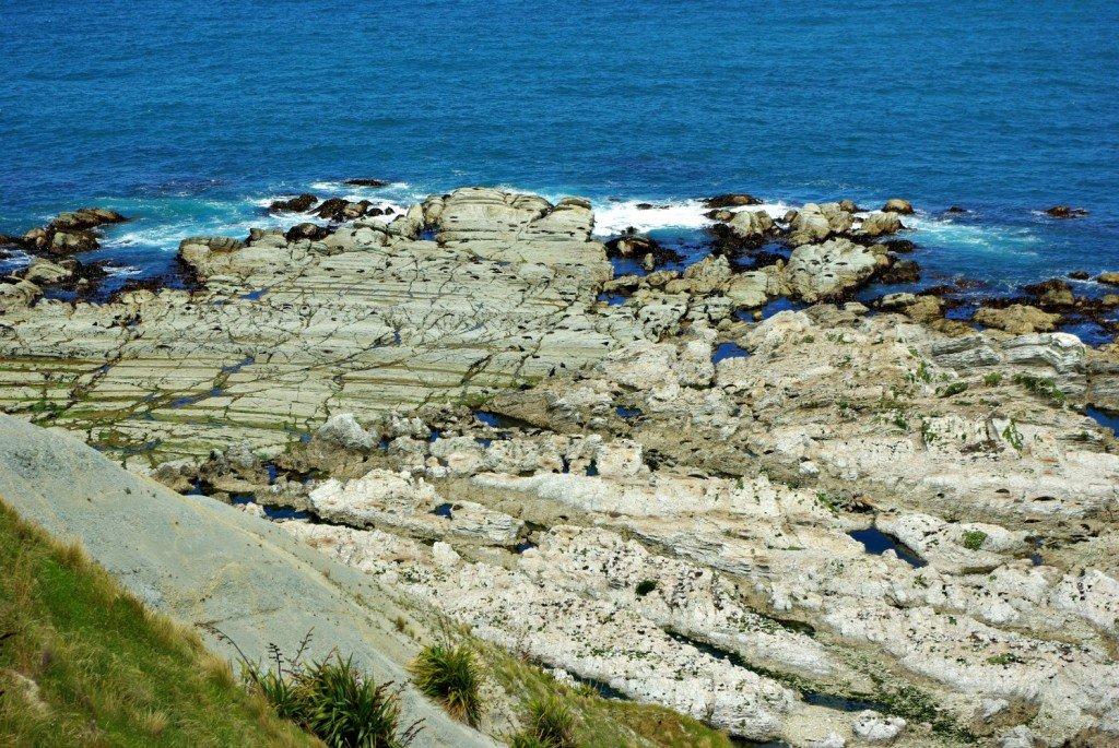 Seals on Rocks Below