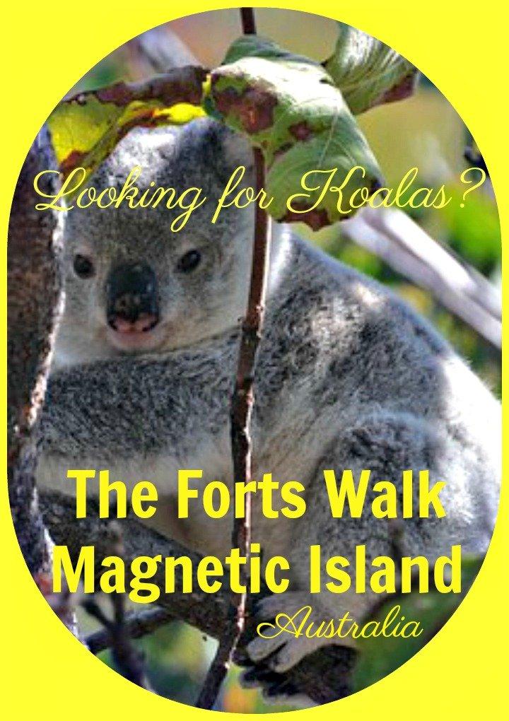 Find a Koala in Australia on the Forts Walk Magnetic Island