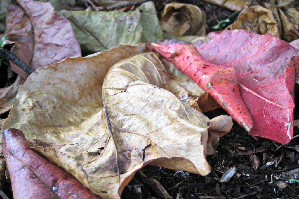 No Sun and Sodden Leaves