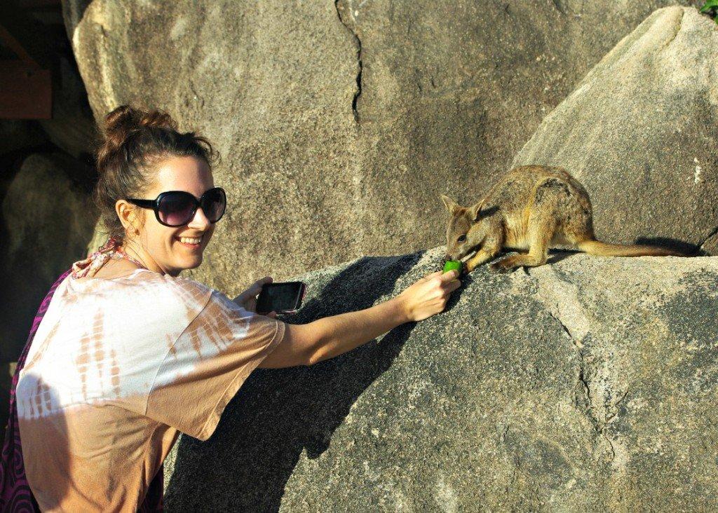 Rock Wallaby Feeding