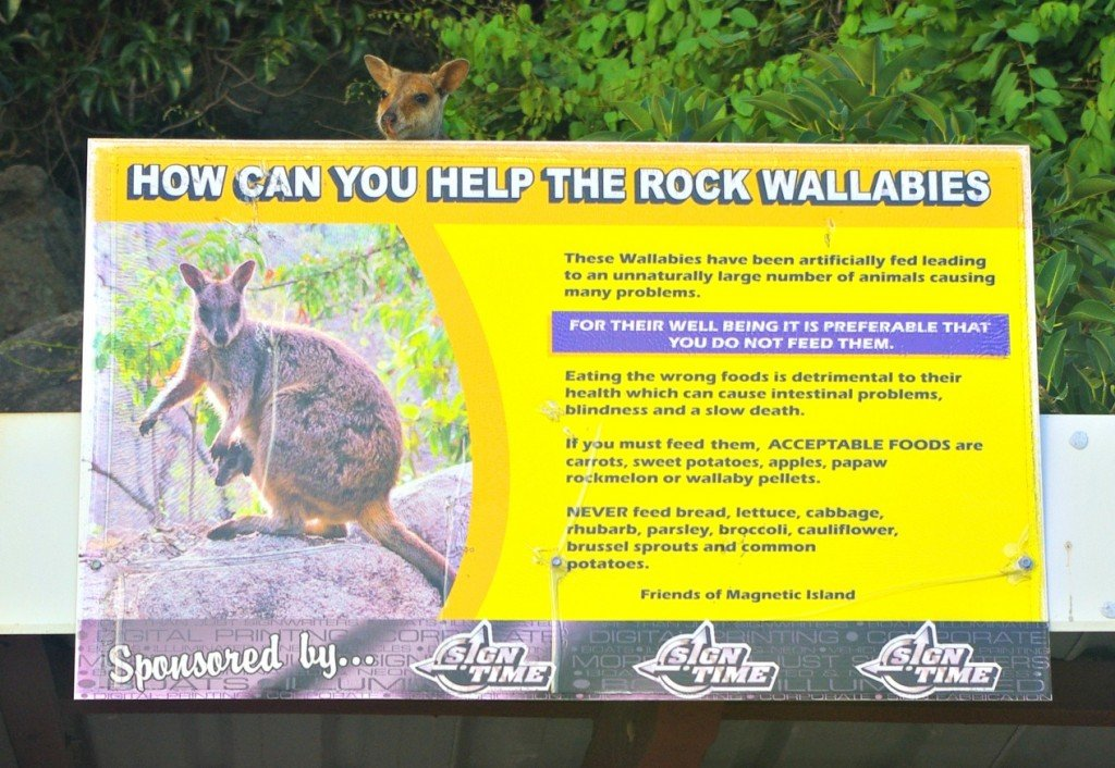 Rock Wallaby and Sign