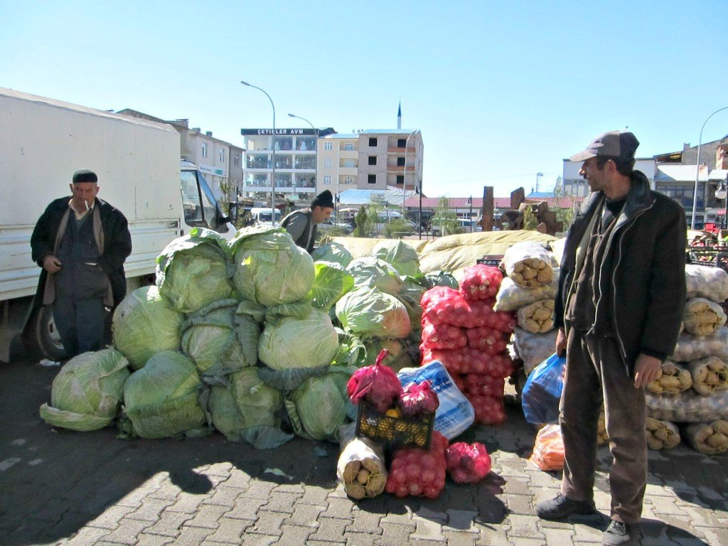 And the sıze of cabbages