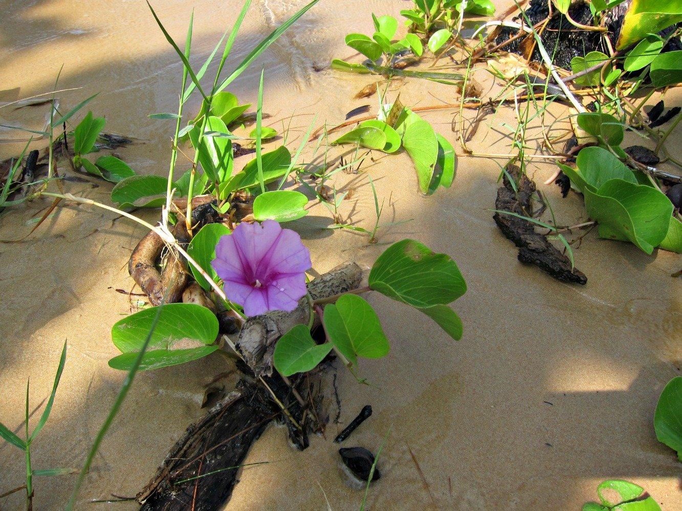 Escape to Bamboo Island Cambodia
