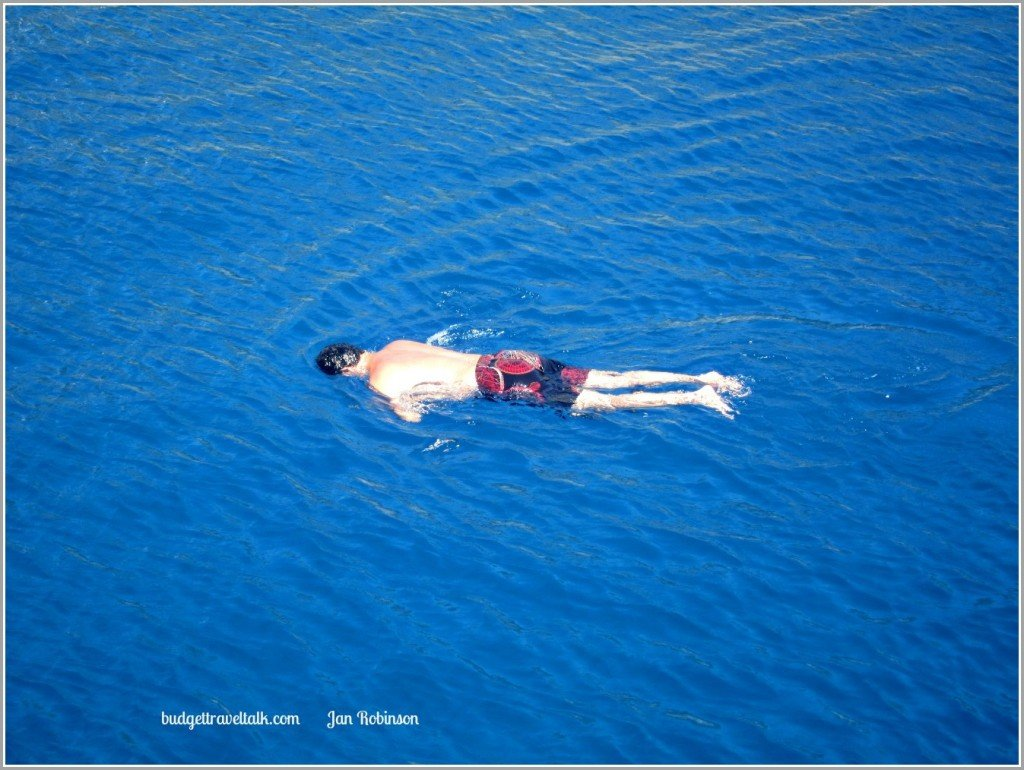 Blue Blue Swimmer B