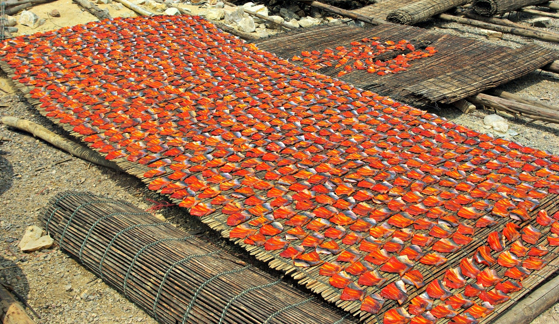 Crowds of Fish Fillets Drying near Battambang Cambodia