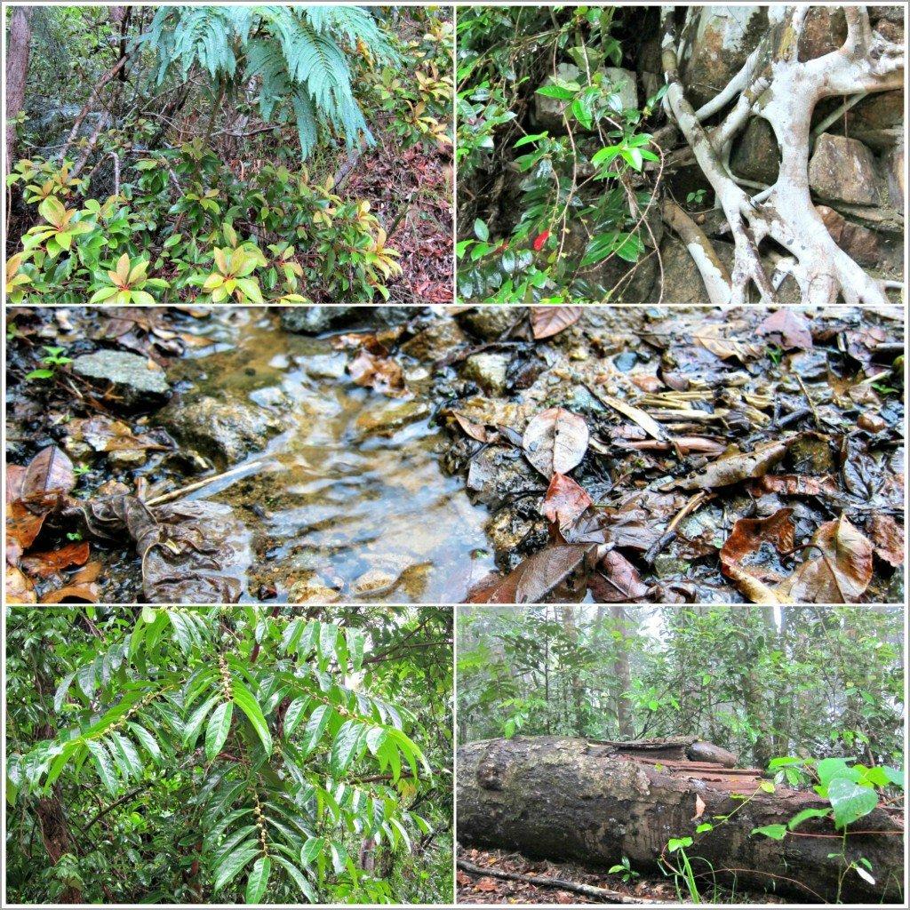 Plants near Little Crystal Creek