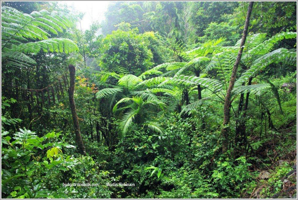 Rainforest Little Crystal Creek Paluma Range North Queensland