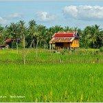 In Search of Salt Fields at Kampot