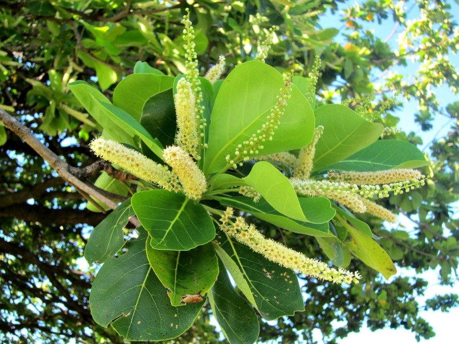 Central Park, Townsville Flowering Tree