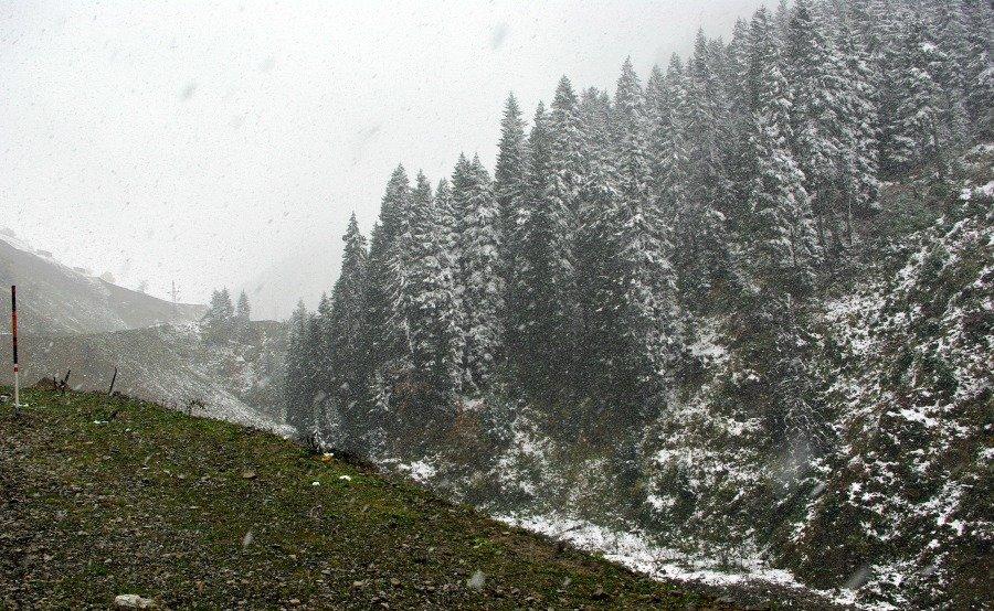 Eastern Turkey Road Trip Day 1 Snowy Pines